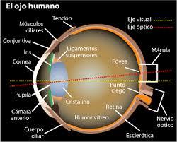 Grafico punto ciego